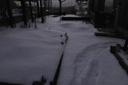 今年の初雪。.JPG