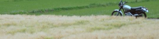 麦畑スキーム2。.jpg